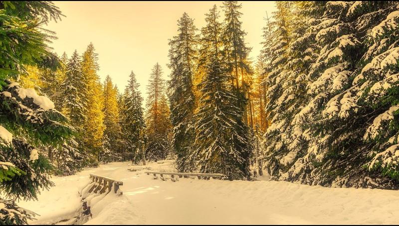Snowy Winter Screensaver Roku Channel Store Roku