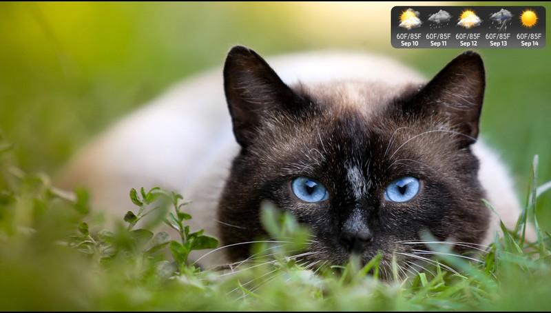 Lovely Cats Screensaver Roku Channel Store Roku